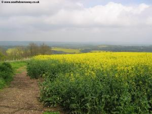 Harting Downs